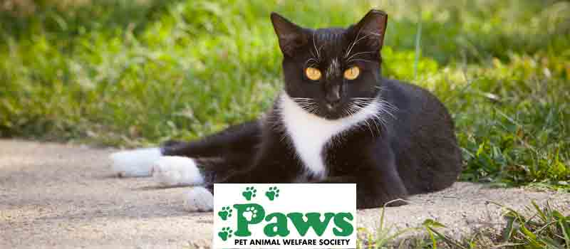 Help spay and neuter some of the thousands of feral (wild) cats in Fairfield County